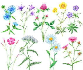 set of meadow flowers
