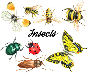 set of watercolor insects