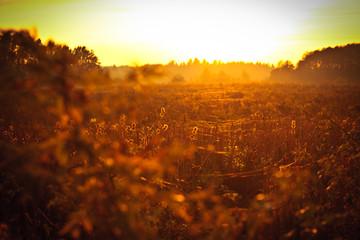 Fototapeta pajęczyna w zachodzącym Słońcu obraz