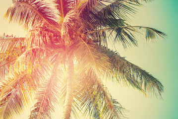 Palm Tree in Sun Light. Holiday Travel Resort. Toned Vintage