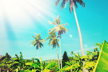 Palm Trees Blue Sky. Thailand Landscape. Travel Background
