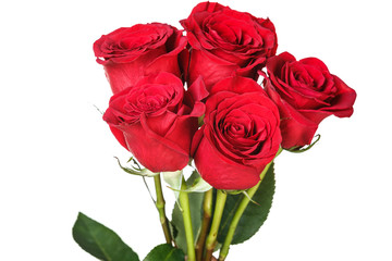 Saturated red roses