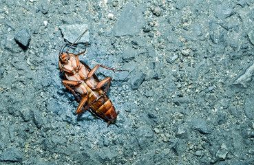 Dead cockroaches on the cement floor, healthcare concept