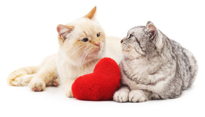 Two cats and red heart.