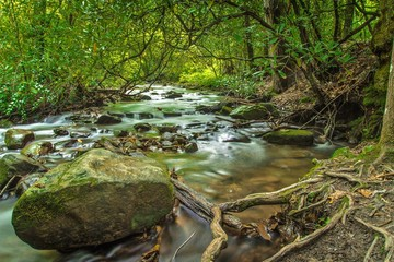 Hiking The Smokies. Stream along a hiking trail in the Great Smoky Mountains National Park. Gatlinburg, Tennessee.