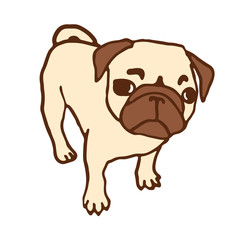 Pug puppy. Hand drawn vector illustration of little cute dog isolated on white. Looking up pug puppy