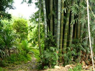 bambou forêt La Réunion
