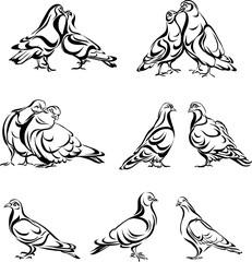 Pigeon, dove, pair, bird, vector, silhouette, black
