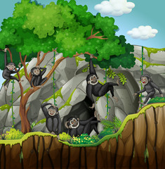 Group of gibbons climbing the tree