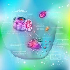 Cell anatomy and functions, nucleus, endoplasmic reticulum, Golgi apparatus, Mitochondrion, Centrosome etc. Proteins synthesis and distribution, exocytosis