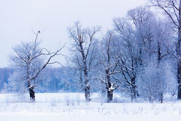 not frozen pond in winter