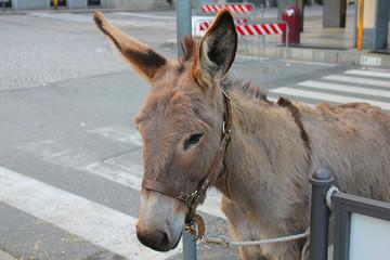 donkey in the street
