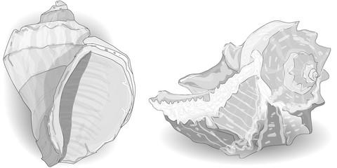 Seashell vector collection