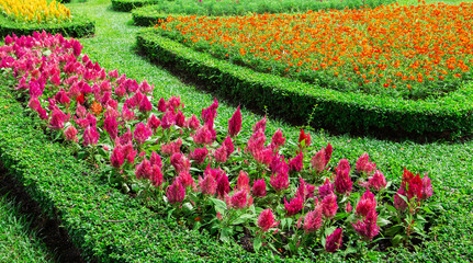 Colorful flowers in the gardens.