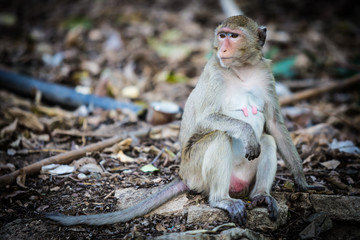 monkey on ground in forest, mother monkey looking for food and child
