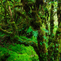 The integrity of the forest. Doi Inthanon National Park. Chiang