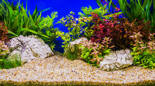 Aquascaping of the beautiful planted tropical freshwater aquariu