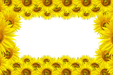 Sunflower Background for presentation/Sunflo wer Background