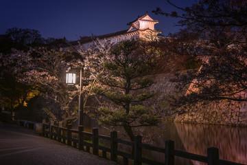 Sakura blossom, Himeji castle, Japan