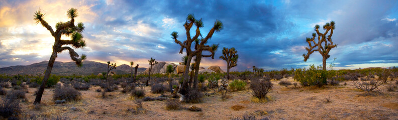 Canvas Print - Sunrise Panorama of Joshua Tree National Park