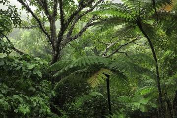 Steamy Rainforest, Lake Morris, Cairns, Queensland, Australia