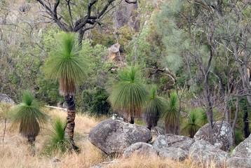 Bushland with Grasstrees, Australia