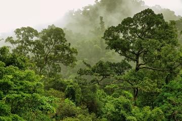 Bushwalking at the Crystal Cascades, Redlynch Valley, Cairns, Far North Queensland, Australia