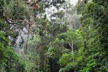 Steamy Rainforest
