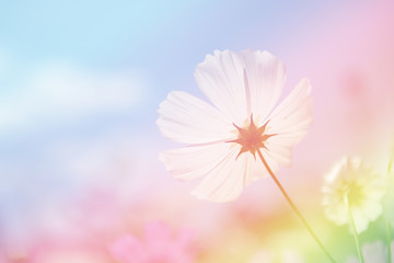 Digital effects colorful abstract for background. Cosmos flower