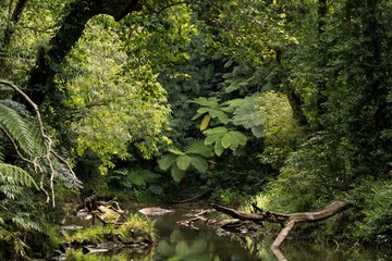 rainforest, Queensland, Australia