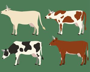 Cows illustration set.