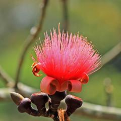 fleurs de filaments