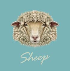 Farm Sheep Portrait.