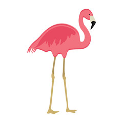 Pink flaming bird