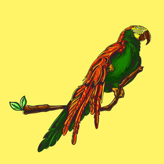 Vector image of a parrot