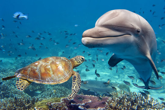 dolphin and turtle underwater on reef