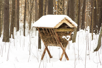 Feed trough in winter forest