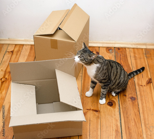 your pet cat book