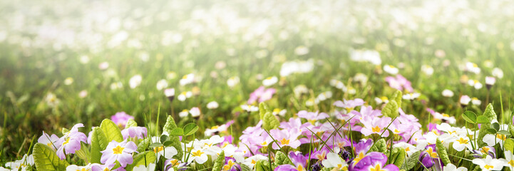 colorful flower panorama