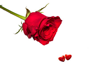 Valentine's rose with two hearts isolated on white background