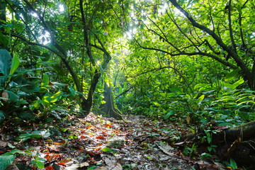 Footpath surrounded by lush vegetation of jungle