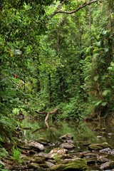 rainforest scenery with creek in North Queensland, Australia
