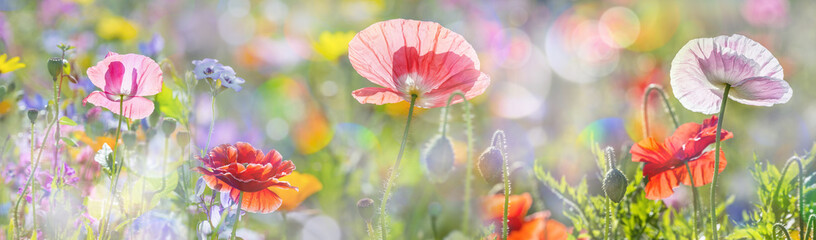 Fond de hotte en verre imprimé Printemps summer meadow with red poppies