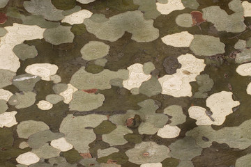 Abstract camouflage patches on surface