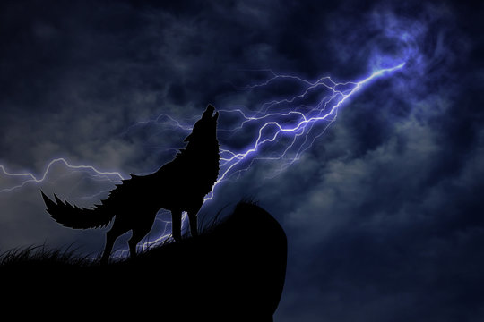 wolf in silhouette to thunderstorm