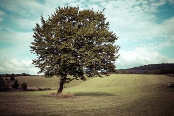 paysage de campagne aux tons pastels avec un arbre au milieu d'un pré