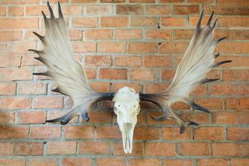 Deer skull hanged