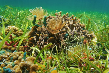 Underwater life on shallow seabed Caribbean sea