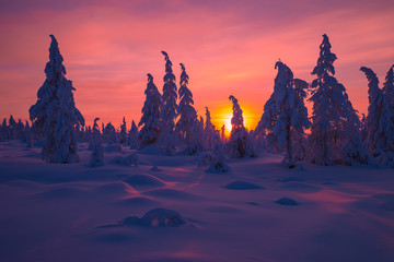Winter landscape with forest, clouds and sunset