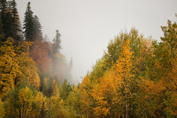 Foggy fall forest